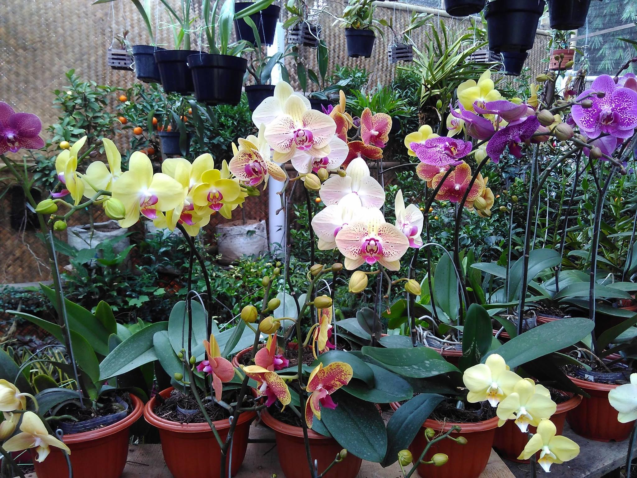 cara menanam bunga anggrek hidroponik